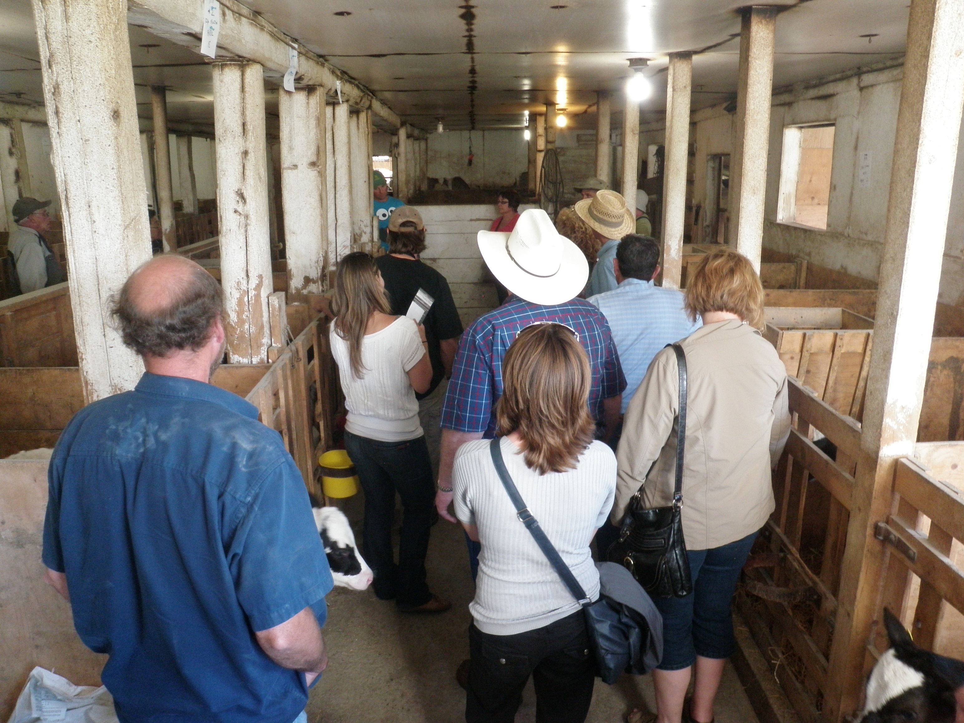 Going through the baby cow area. at E.P. Farms, representing the Kootenay Milk Producers.